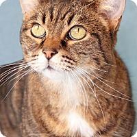 Adopt A Pet :: Jose Cuervo - Encinitas, CA