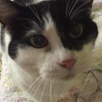 Adopt A Pet :: Moosie - mishawaka, IN