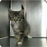 Adopt A Pet :: Jamie - Mission, BC