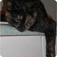 Adopt A Pet :: Gabriella - Waukesha, WI