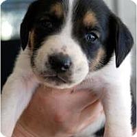 Adopt A Pet :: Trace - Orlando, FL