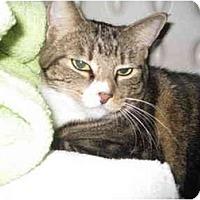 Adopt A Pet :: Sweet Pea - Mesa, AZ