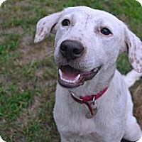 Adopt A Pet :: Brisa - Pawling, NY