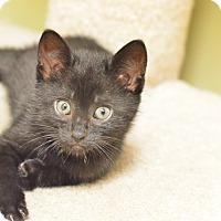 Adopt A Pet :: Lucio - Island Park, NY