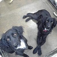 Adopt A Pet :: Gallup - El Paso, TX
