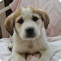 Adopt A Pet :: Pamela - Huntsville, AL