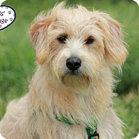 Adopt A Pet :: Quinton: In Training - Lee's Summit, MO