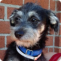 Adopt A Pet :: Sherlock - Redondo Beach, CA