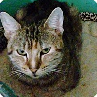 Adopt A Pet :: Baby - Franklin, NH