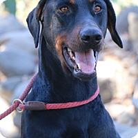 Adopt A Pet :: Brink - Fillmore, CA