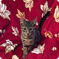 Adopt A Pet :: Hero - Colmar, PA