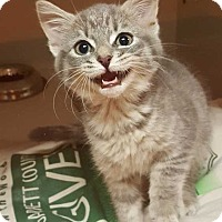 Adopt A Pet :: Asia - Accident, MD