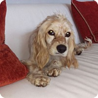 Adopt A Pet :: Lilo - Inglewood, CA