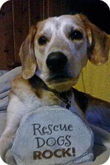 Beagle Mix Dog for adoption in Grafton, Wisconsin - Christina - PENDING