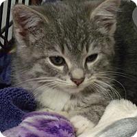 Adopt A Pet :: Valkyrie - Somerset, KY