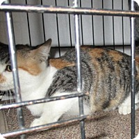 Adopt A Pet :: MARBLE - detroit, MI