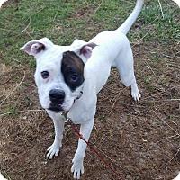 Adopt A Pet :: Zeke - Wilmington, DE