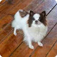 Adopt A Pet :: DIXIE - ADOPTION PENDING - Smithfield, PA