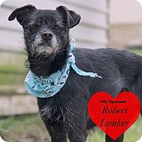 Adopt A Pet :: Curtis - San Leon, TX