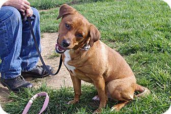 Shepherd (Unknown Type) Mix Dog for adoption in Elyria, Ohio - Sadie