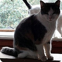 Adopt A Pet :: Sheila - Saint Albans, WV