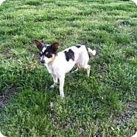 Adopt A Pet :: Lila Rain - Hazard, KY