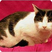 Adopt A Pet :: Oreo - Sacramento, CA