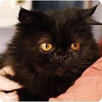 Adopt A Pet :: Callie - Columbus, OH