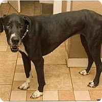 Adopt A Pet :: Zoe - Newcastle, OK