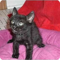 Adopt A Pet :: Wilson - Lombard, IL