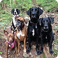 Adopt A Pet :: Charli - Vancouver, BC