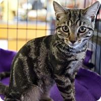 Adopt A Pet :: Shalina 05-3979 - Fremont, CA