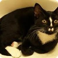 Adopt A Pet :: Pharoah - brewerton, NY