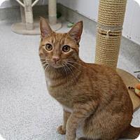 Adopt A Pet :: Curly - Newport Beach, CA
