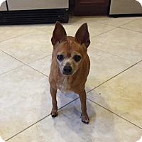 Adopt A Pet :: Dora - Ocean Ridge, FL