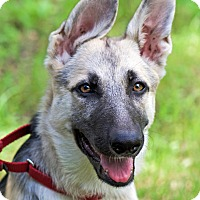 Adopt A Pet :: Delta - Dripping Springs, TX