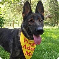 Adopt A Pet :: Meisha - Louisville, KY