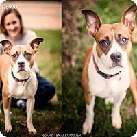 Adopt A Pet :: LAYLA - Atlanta, GA