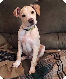 Mountain Cur Mix Puppy for adoption in Baton Rouge, Louisiana - Mathieu