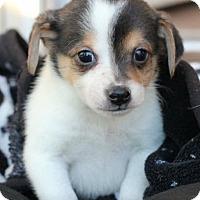 Adopt A Pet :: Alpha - Christiana, TN