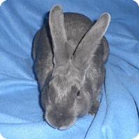 Adopt A Pet :: George - Woburn, MA