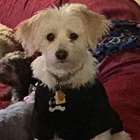 Adopt A Pet :: Bubba - Harrisburg, PA