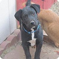 Adopt A Pet :: Sister - El Paso, TX