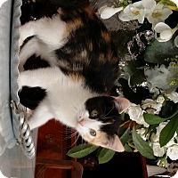 Adopt A Pet :: Bailey - Orange, CA