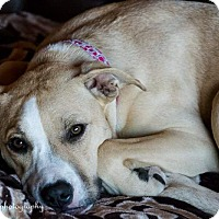 Adopt A Pet :: Bailey - Temecula, CA