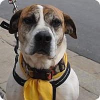 Adopt A Pet :: Wilma - Rockville, MD