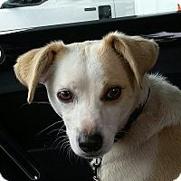 Adopt A Pet :: Ginger - Salem, OR