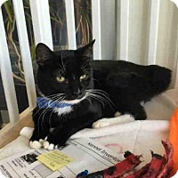 Adopt A Pet :: KRAMPUS - Canfield, OH