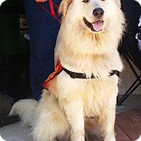Adopt A Pet :: Bubba - Kyle, TX