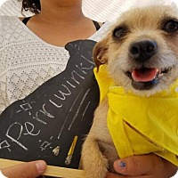 Adopt A Pet :: Periwinkle - Apple Valley, CA